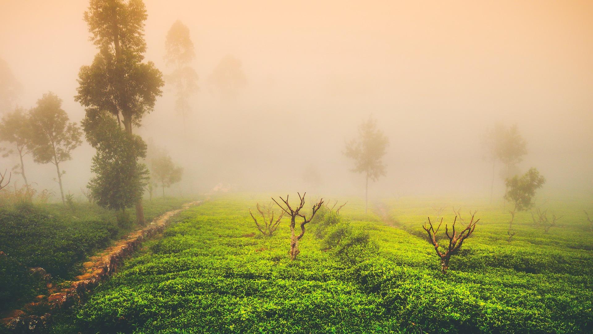kusmi tea - achat de café en ligne - epicerie fine